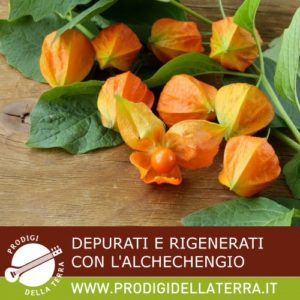 ALCHECHENGIO2